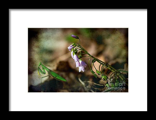 Pray Framed Print featuring the photograph Floral Mantis by The Stone Age