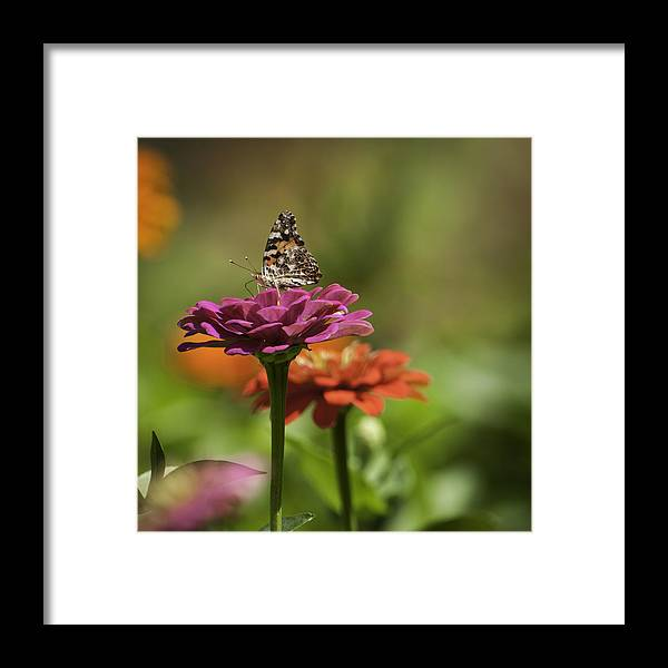 Pink Framed Print featuring the photograph Flower And Butterfly by Chad Davis