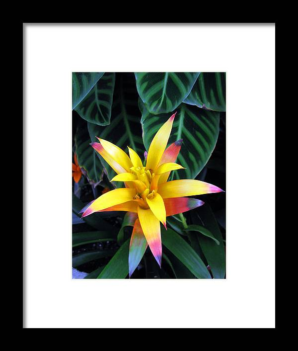 Flora Framed Print featuring the photograph Flower And Leaves Succulent by Richard Singleton