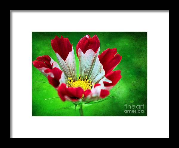 Flower Framed Print featuring the photograph Flower by Billie-Jo Miller