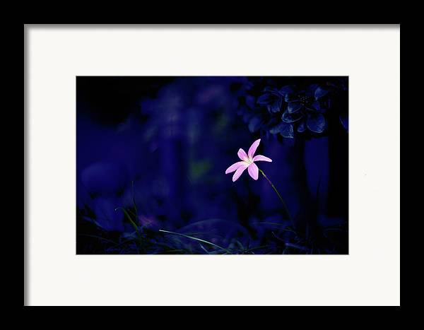 Horizontal Framed Print featuring the photograph Flower by Moaan