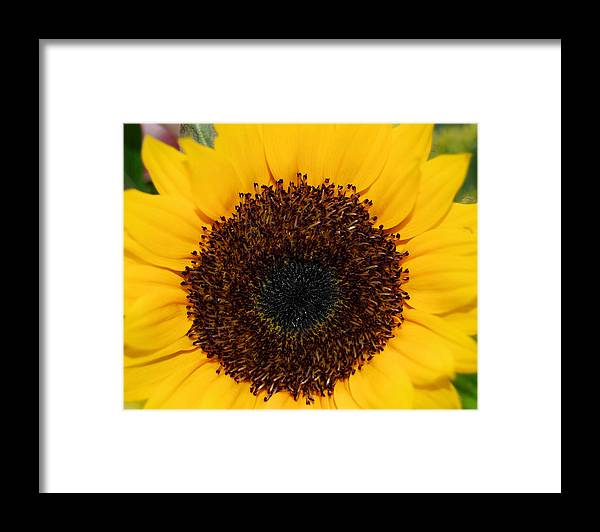 Sun Framed Print featuring the photograph Flower Of The Sun by JAMART Photography