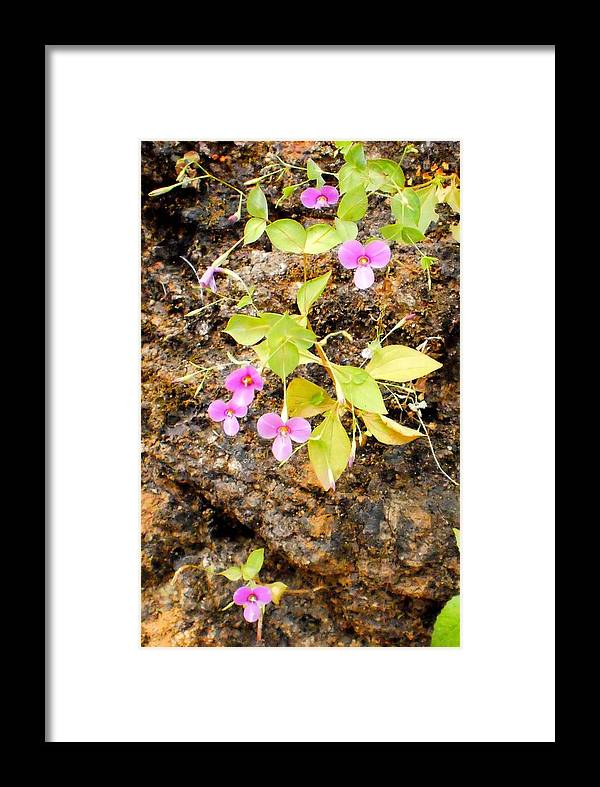 Nature Framed Print featuring the photograph Flower On Rocks by Manish Kadam