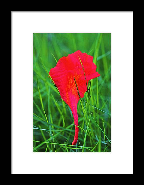 Leaf Framed Print featuring the photograph Flower Petal And Grass- St Lucia by Chester Williams