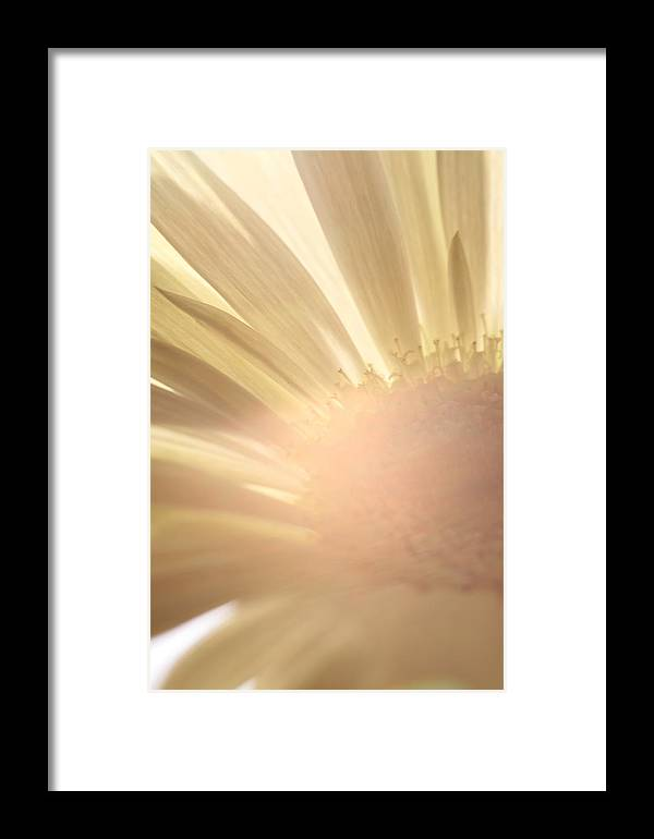 Blume Framed Print featuring the photograph Flower Picture by Falko Follert