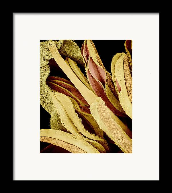 Sem Framed Print featuring the photograph Flower Reproductive Parts, Sem by Susumu Nishinaga