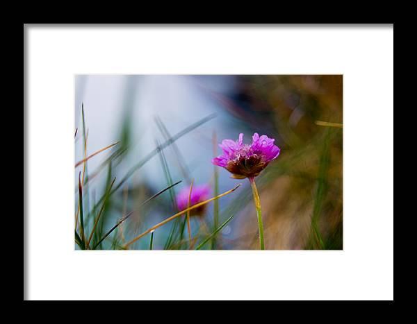 Flower Framed Print featuring the photograph Flower by Sandor Petroman