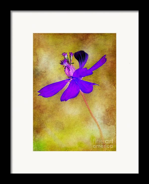Flower Framed Print featuring the photograph Flower Take Flight by Judi Bagwell