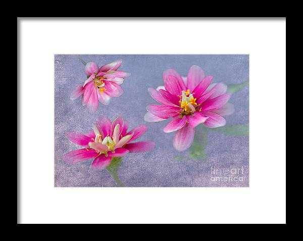 Floral Framed Print featuring the photograph Flower Triplets by Betty LaRue