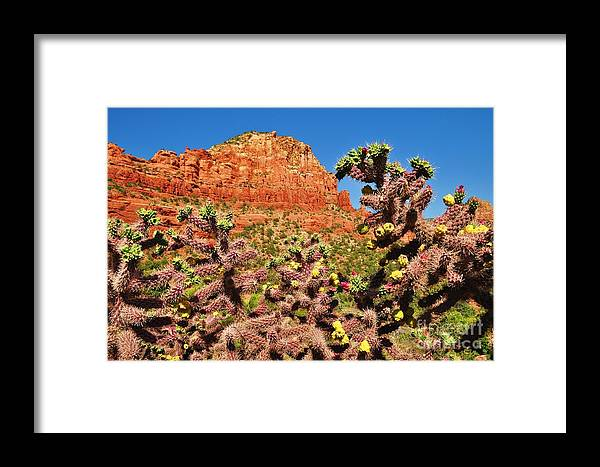 Sedona Framed Print featuring the photograph Flowering Desert Cactus Framing Red Rock Cliffs by George Sylvia