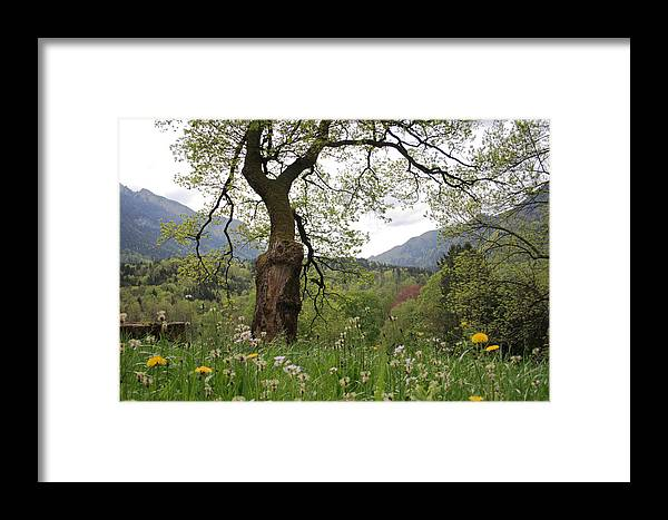 Nature Framed Print featuring the photograph Flowering Maple Tree by Ulrich Kunst And Bettina Scheidulin