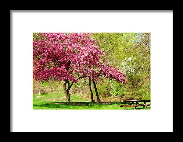 Tree Framed Print featuring the photograph Flowering Tree by Kenneth Sponsler