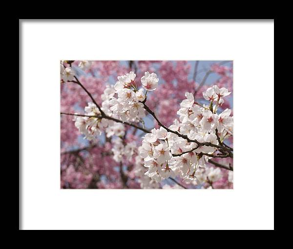 Flowers Framed Print featuring the photograph Flowers by Alan Grodin