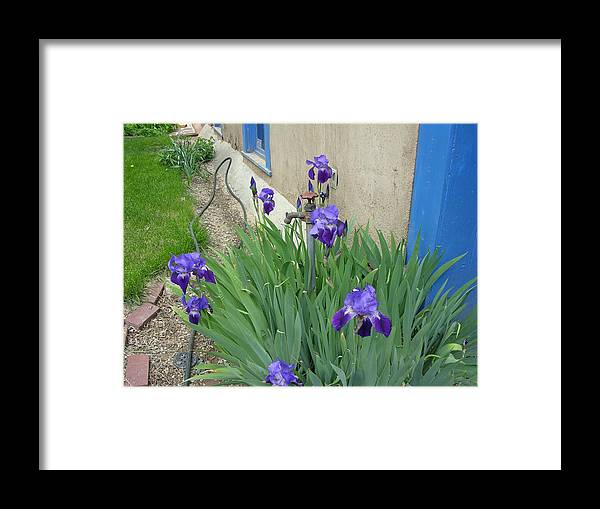 New Mexico Framed Print featuring the photograph Flowers And Colors Of Taos by Helen Haw