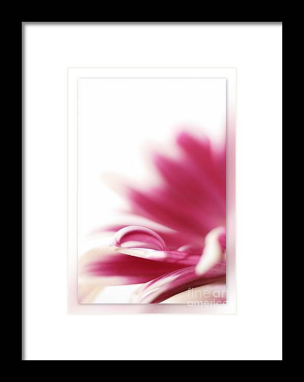 Pink Framed Print featuring the photograph Flowers Drop by Silvio Schoisswohl