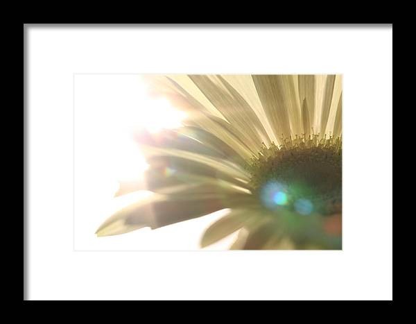 Blume Framed Print featuring the photograph Flowers by Falko Follert
