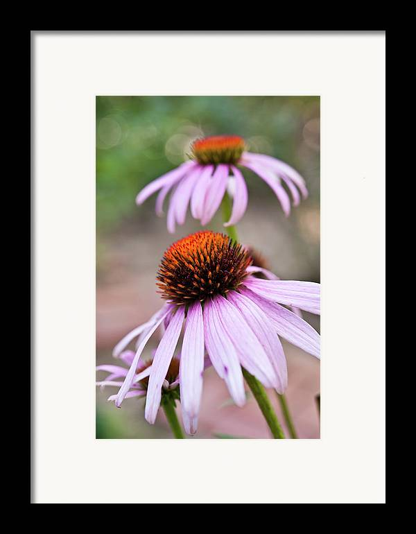 Vertical Framed Print featuring the photograph Flowers by invisibleA
