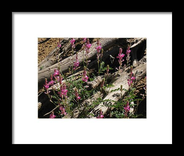 Multiple Flowers Framed Print featuring the photograph Flowery Log by Amara Roberts