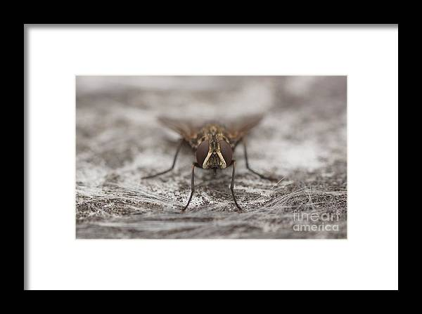 Fly Framed Print featuring the digital art fly by Bencso Tomas