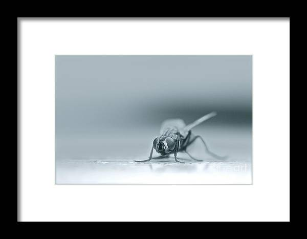 Insect Framed Print featuring the photograph Fly Waiting by Lewis Bonner
