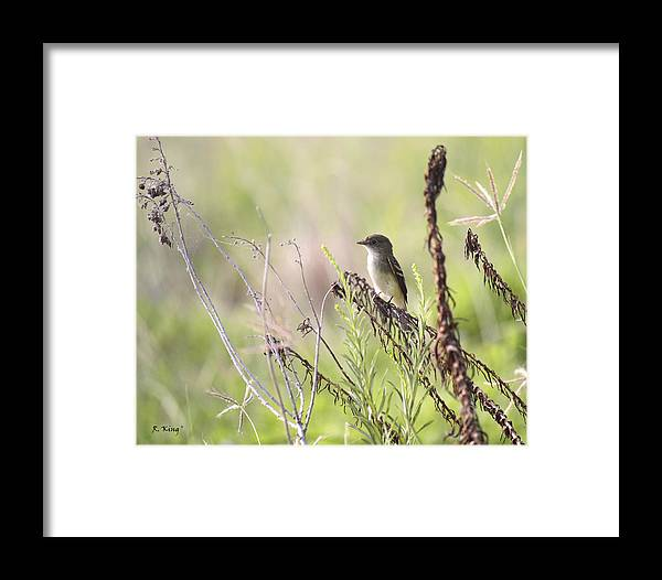 Roena King Framed Print featuring the photograph Flycatcher On A Twig by Roena King