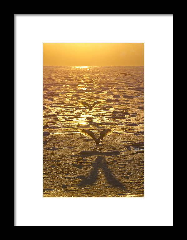 Adult Framed Print featuring the photograph Flying Over Icy Waters by Tim Grams