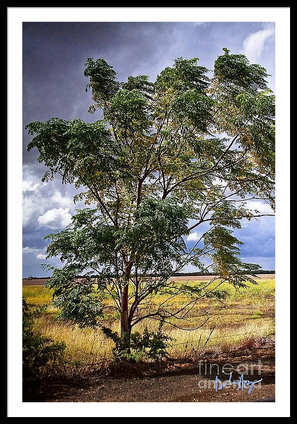 Dinah Anaya Framed Print featuring the photograph Fm 162  1 by Dinah Anaya