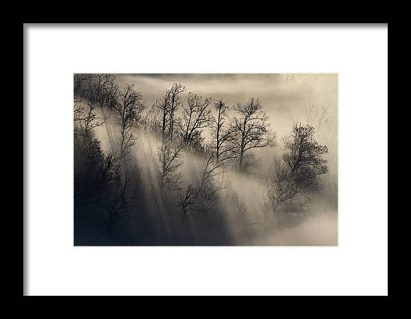Fog Framed Print featuring the photograph Fog by Michele Pietrangelo