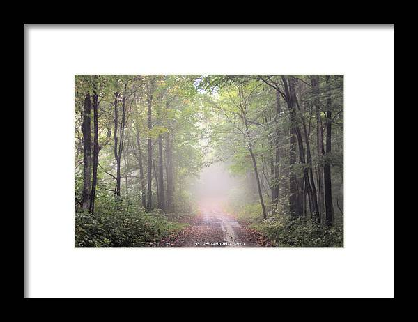 Trees Framed Print featuring the photograph Foggy Country Road by Carolyn Postelwait