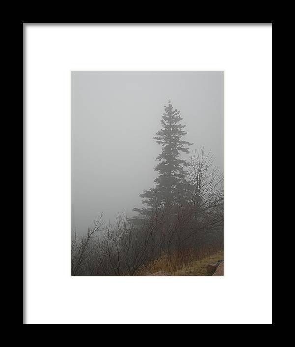Maine Framed Print featuring the photograph Foggy Sentinel by Skip Willits