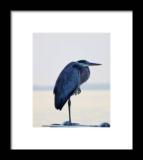 Aerial Framed Print featuring the photograph Foot Rest by William Bartholomew