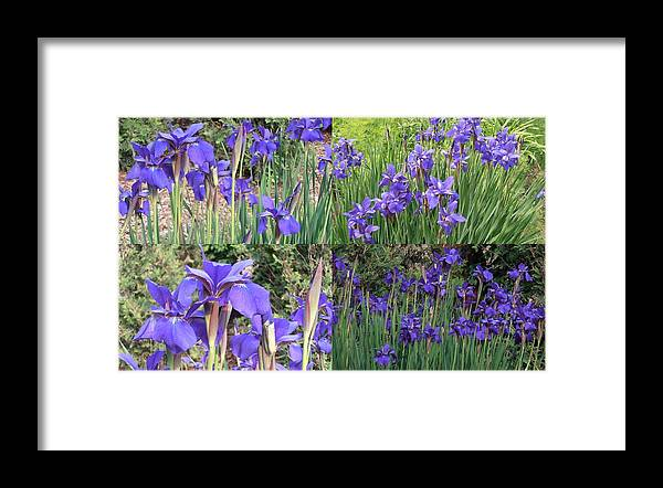 Blue Framed Print featuring the photograph for Iris by Tim Donovan