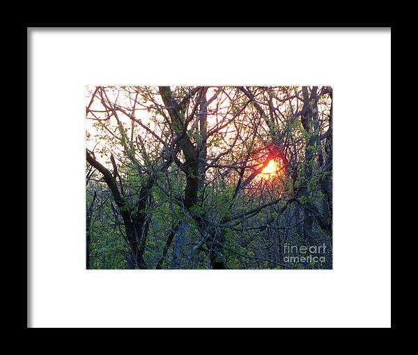 Landscape Framed Print featuring the photograph Forest Walk 21 by Cedric Hampton
