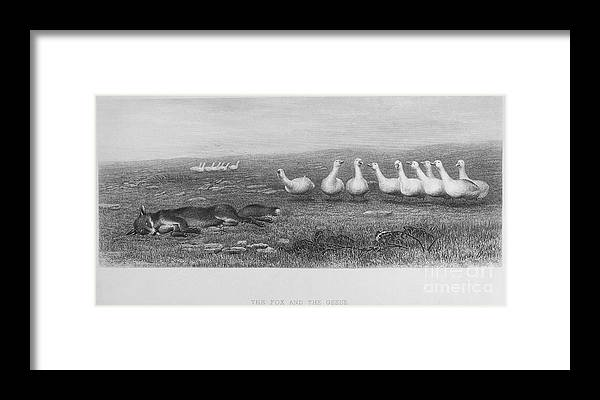 19th Century Framed Print featuring the photograph Fox & Geese, 19th Century by Granger