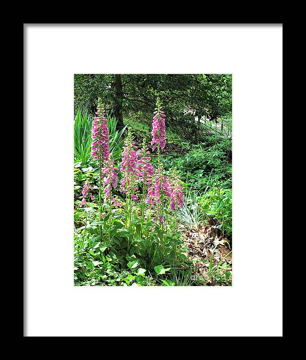 Foxglove Framed Print featuring the photograph Foxgloves In My Garden by Sandy McIntire