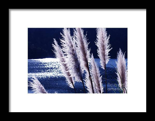 Foxtails Framed Print featuring the photograph Foxtails At The Lake by Polly Villatuya
