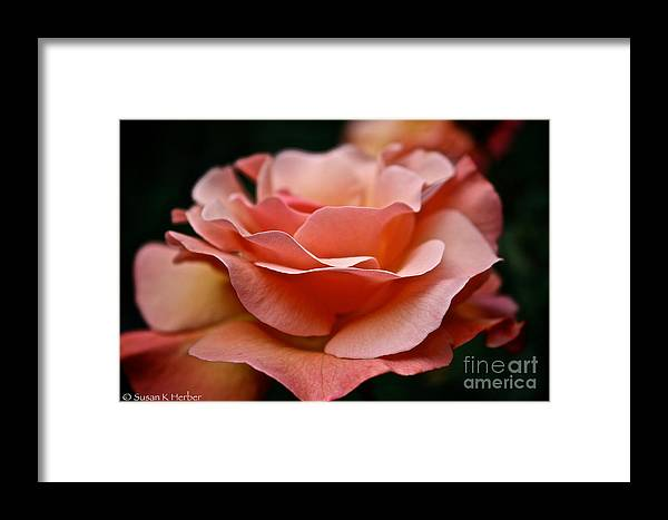 Garden Framed Print featuring the photograph Fragile by Susan Herber