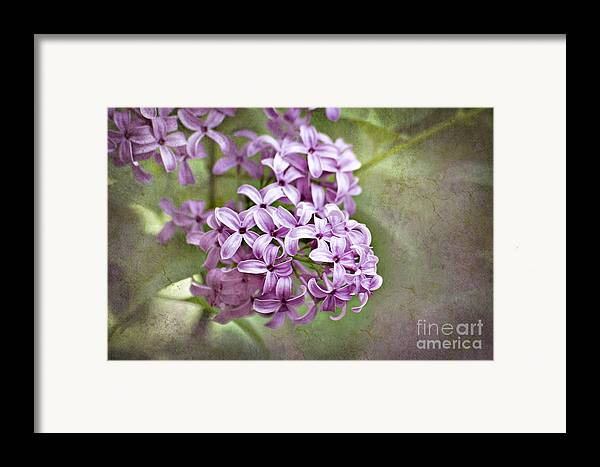 Lilac Framed Print featuring the photograph Fragrant Purple Lilac by Cheryl Davis
