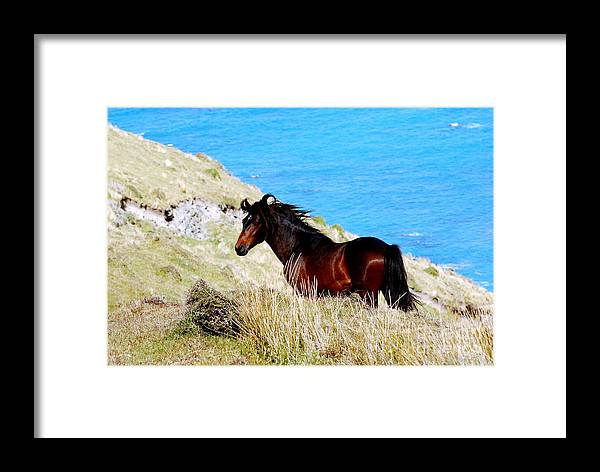 Wild Horse Framed Print featuring the photograph Free Spirit by Johanne Peale