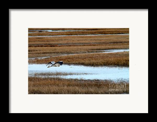 Bird Framed Print featuring the photograph Freedom by Eric Chapman