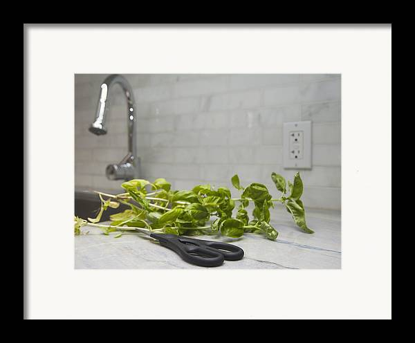 Toronto Framed Print featuring the photograph Fresh Basil Herb Leaves From The Garden by Marlene Ford