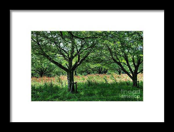Nature Framed Print featuring the photograph Fresh Green Time by Tad Kanazaki
