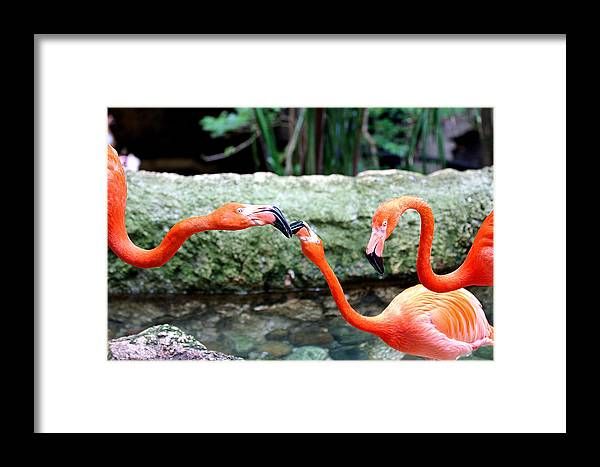 Flamingo Framed Print featuring the photograph Friend Or Foe by Elizabeth Hart