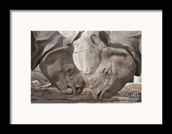 Rhino Framed Print featuring the photograph Friend Or Foe by Jason Waugh