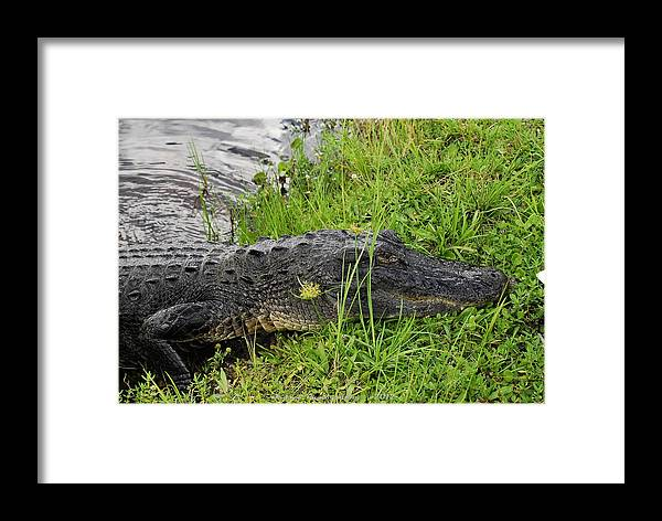 Reptile Framed Print featuring the photograph Friendly Face by G Adam Orosco