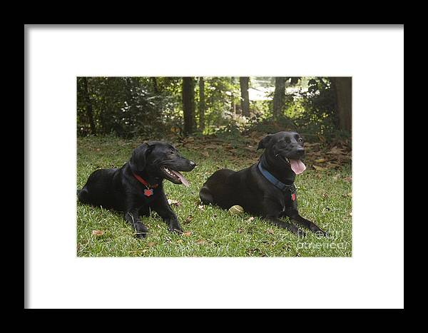 Pets Framed Print featuring the photograph Friends by D V