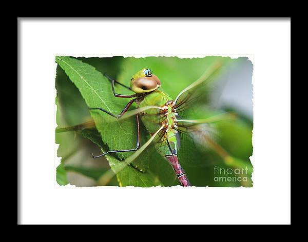 Insects Framed Print featuring the photograph Fringes Of Life by Lori Mellen-Pagliaro