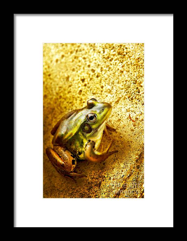 Frog Framed Print featuring the photograph Frog by HD Connelly