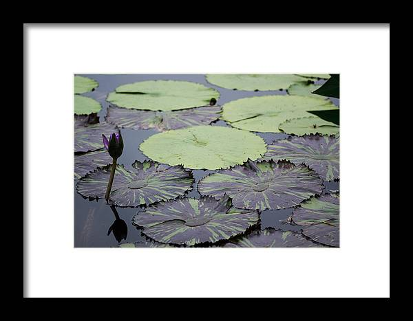 Flower Framed Print featuring the photograph Frog Highway by Paul Slebodnick