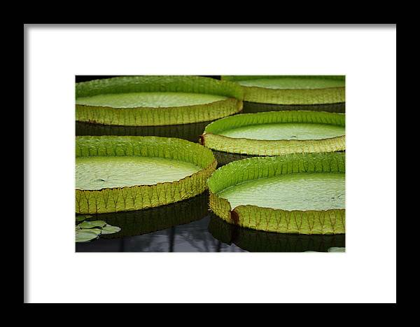 Flower Framed Print featuring the photograph Frog Paradise by Paul Slebodnick